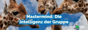 Mastermind: Die Intelligenz der Gruppe